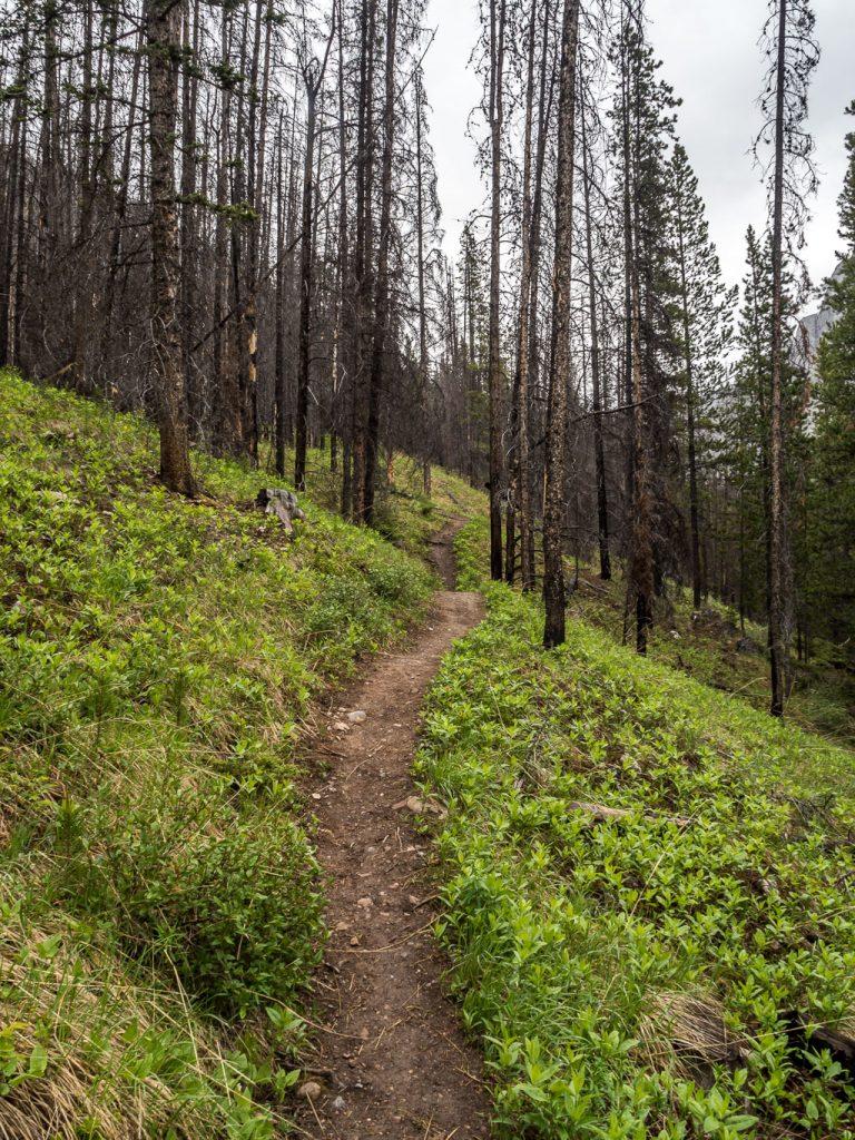 The Buller Creek Trail.