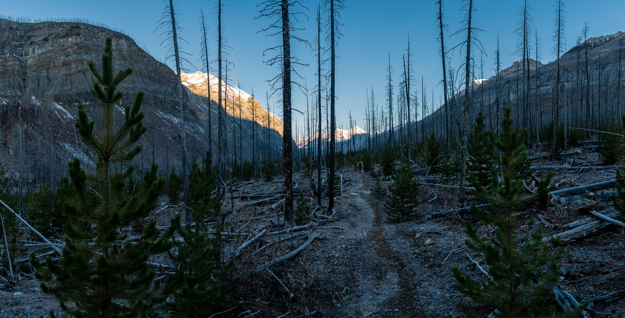 The fires from 2003 certainly have made their mark in Prospectors Valley for a long time to come.
